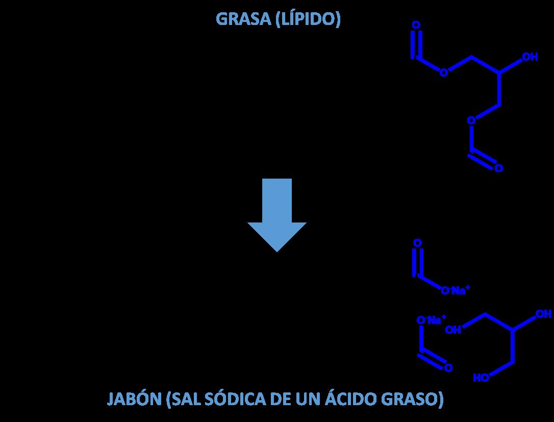 esquema-saponificacion